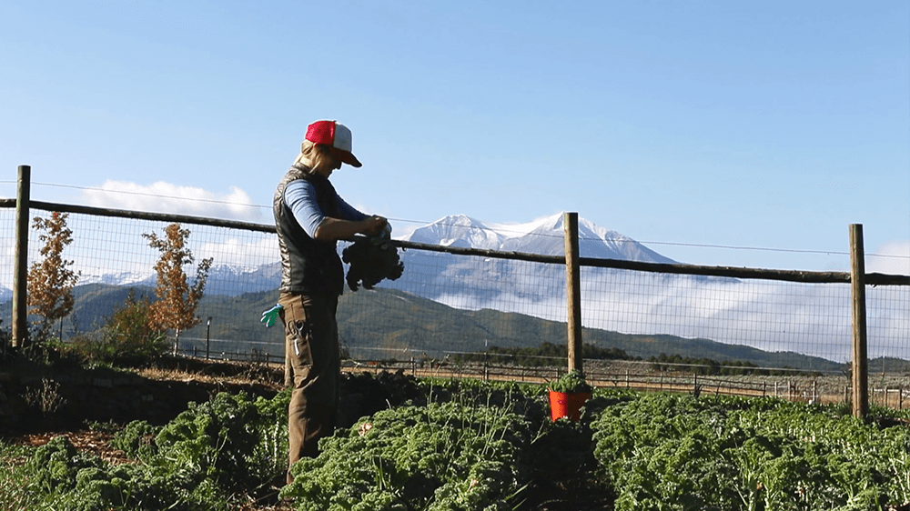 How We Grow, Farming in the Roaring Fork Valley