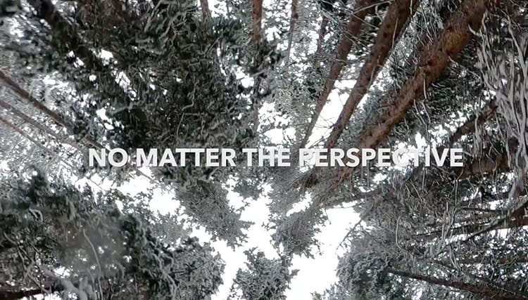 Image with text overlay 'No Matter the Perspective' looking up at the trees in Aspen Colorado.